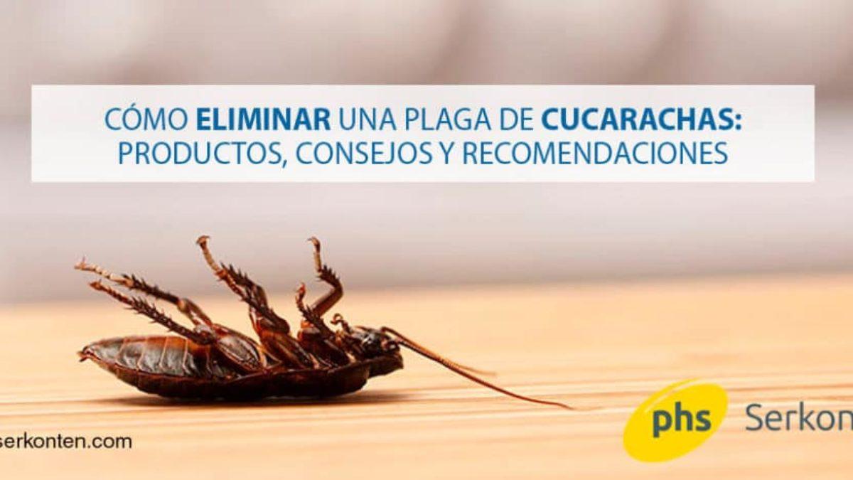 Cómo Debes Eliminar Una Plaga De Cucarachas Que Remedios Existen