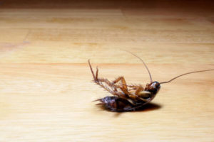 C mo debes eliminar una plaga de cucarachas que remedios for Como eliminar cucarachas pequenas en casa