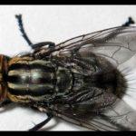 ¿Cómo eliminar moscas de manera efectiva y sin esfuerzo en tu local comercial?