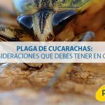 Plaga de cucarachas: Consideraciones que debes tener en cuenta